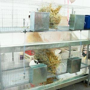 клетки из сетки для кроликов