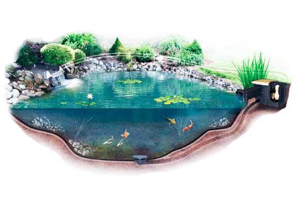пруд для разведения рыбы схема