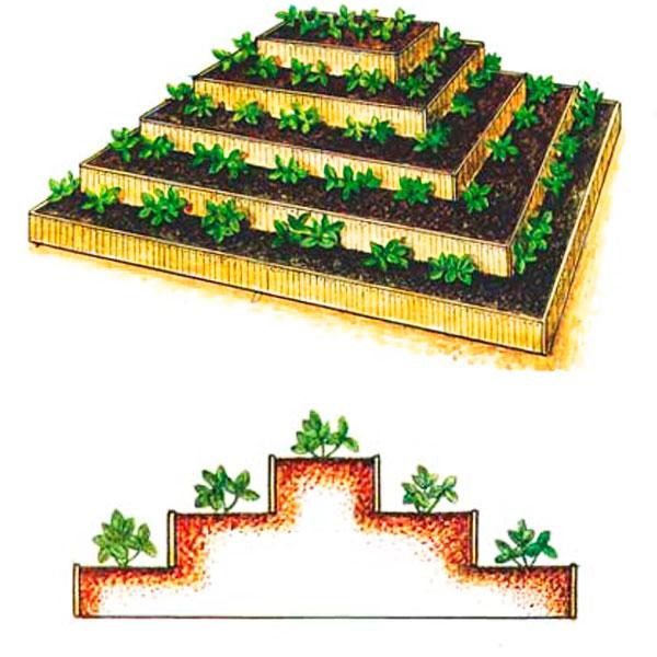 грядка пирамида для клубники схема