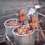 картофелесажалка